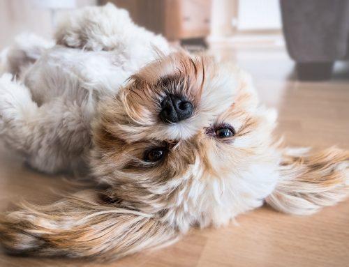 Hai un cane in casa e vuoi un ambiente pulito e sano?